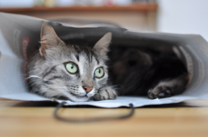 Feline behaviour