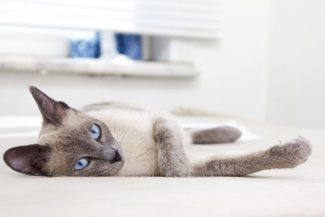 With CATitude your cat stays relaxed and happy
