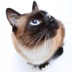 feline health semina